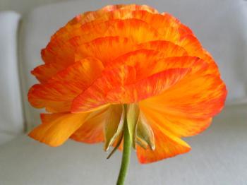 Garden20120429.jpg