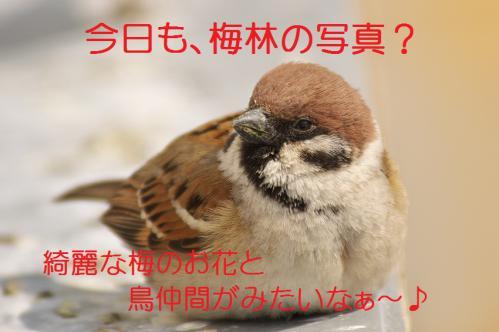 000_20130313214732.jpg