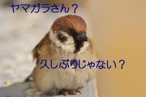 001_20130215211307.jpg