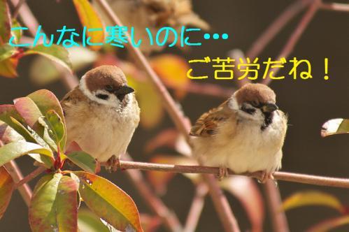 010_20130223221553.jpg