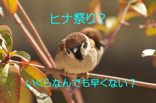 010_20130302042739.jpg