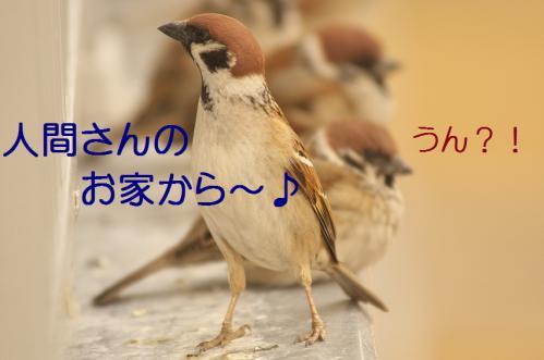 010_20130308224954.jpg