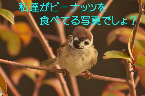 010_20130311210356.jpg