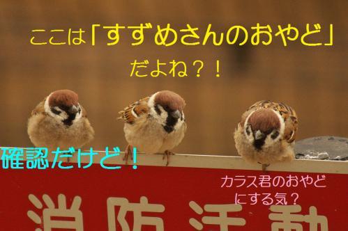 010_20130316193601.jpg