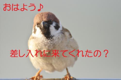 010_20130317211830.jpg