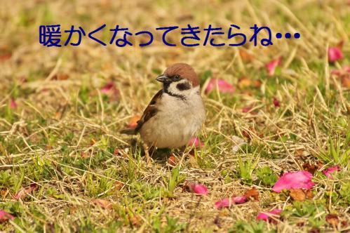 010_20130319203406.jpg