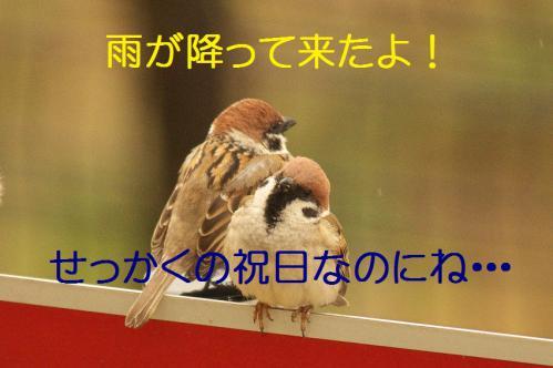010_20130320211008.jpg