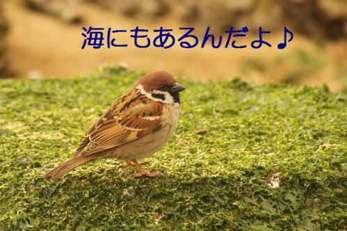 010_20130322231117.jpg