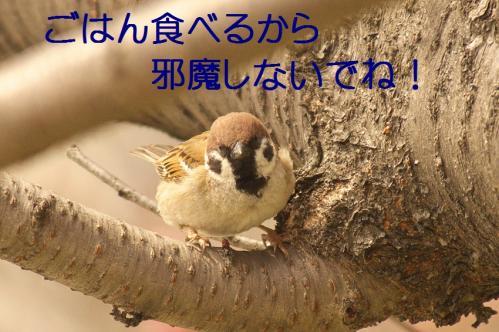 010_20130328200746.jpg