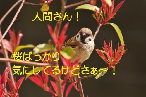 010_20130329213743.jpg