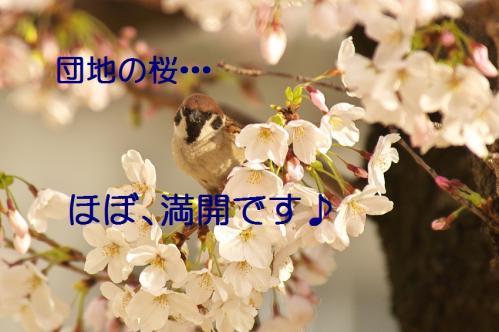 010_20130330214640.jpg