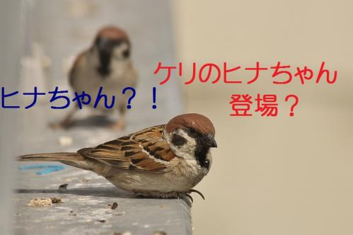010_20130428194638.jpg