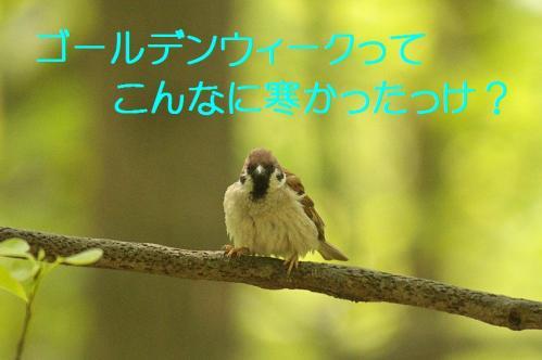 010_20130503222009.jpg