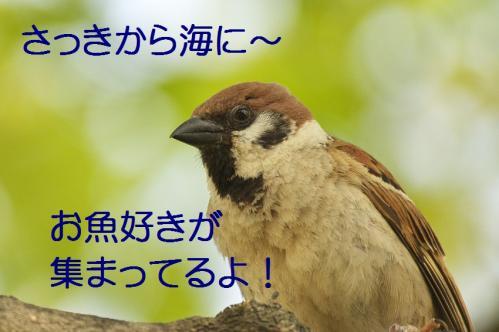 010_20130527215229.jpg