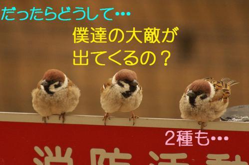 015_20130316193604.jpg