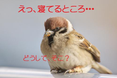 020_20130305204121.jpg
