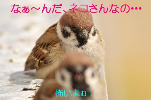 020_20130313214737.jpg