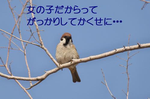 020_20130322213340.jpg