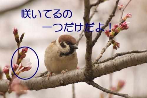 020_20130327205845.jpg