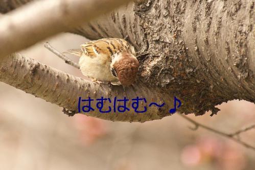 020_20130328200751.jpg