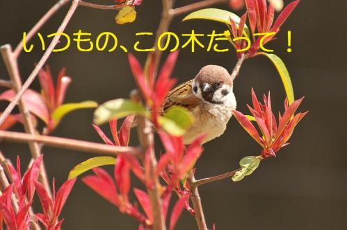 020_20130329213748.jpg