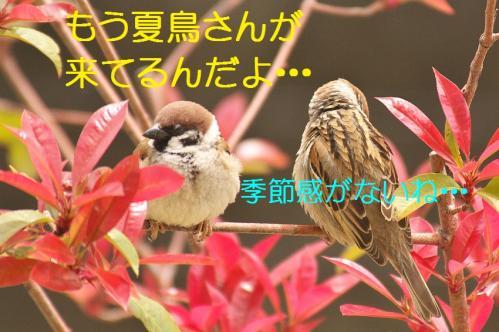020_20130416214308.jpg