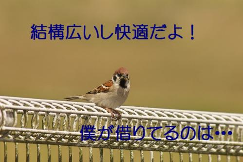 020_20130430194235.jpg