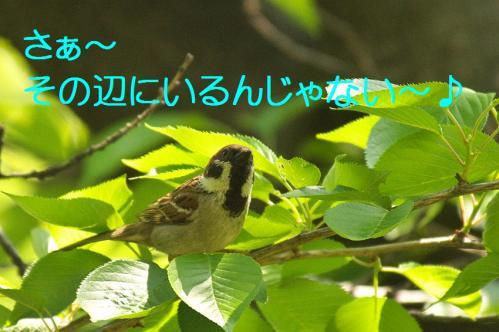 020_20130502205805.jpg