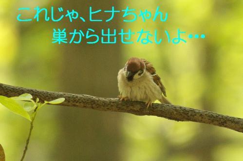 020_20130503222014.jpg