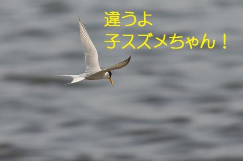020_20130528185014.jpg