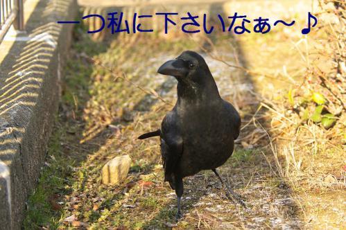 025_20130307204423.jpg