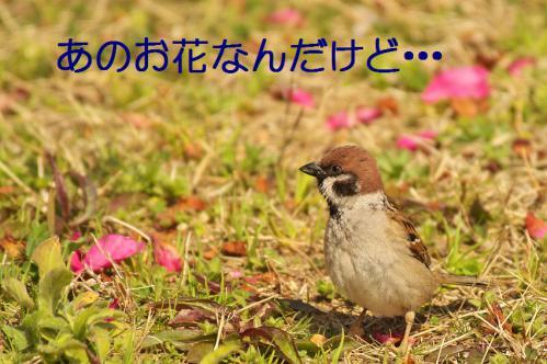 025_20130319203415.jpg