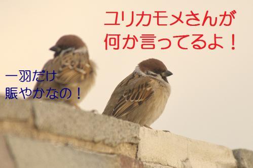 030_20130223221559.jpg