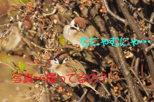 030_20130305204128.jpg