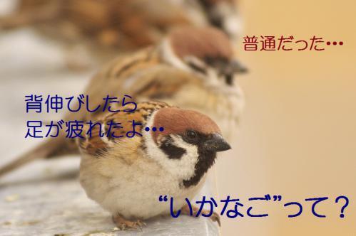 030_20130308224959.jpg