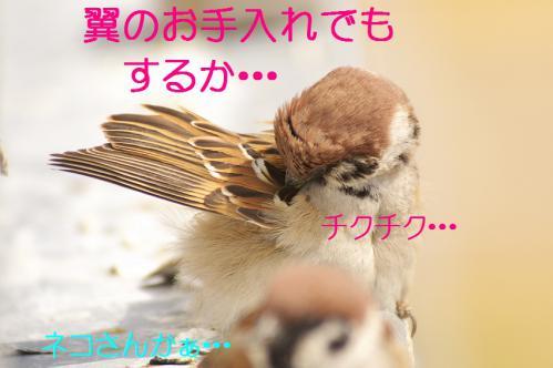 030_20130313214740.jpg