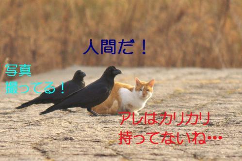 030_20130316193611.jpg