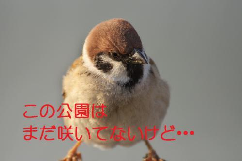 030_20130317211836.jpg