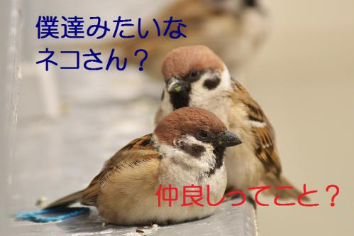 030_20130318215150.jpg