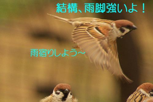 030_20130320211015.jpg