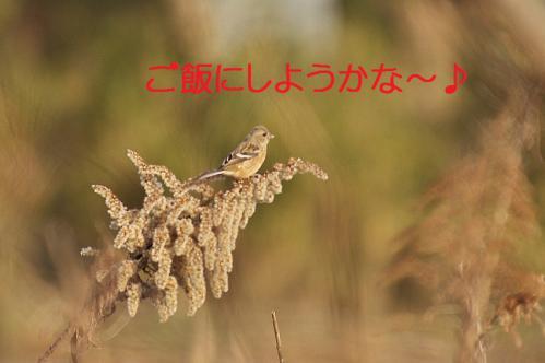030_20130322213343.jpg