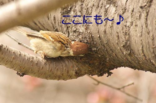030_20130328200756.jpg