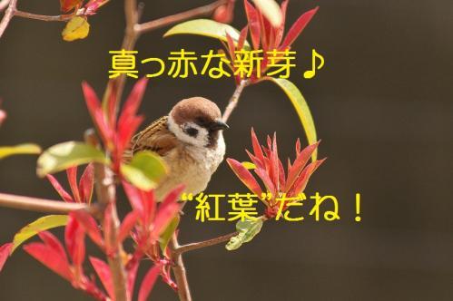 030_20130329213753.jpg