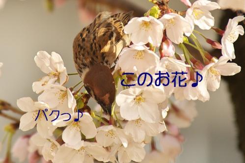 030_20130330214652.jpg