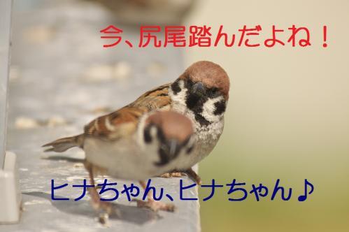 030_20130428194644.jpg
