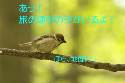 030_20130503222017.jpg