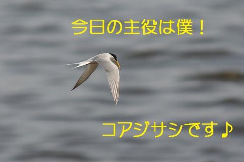 030_20130528185017.jpg