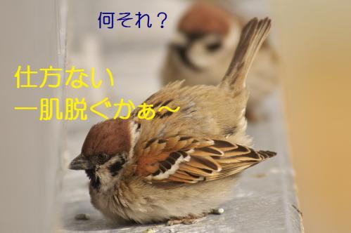 035_20130304213743.jpg