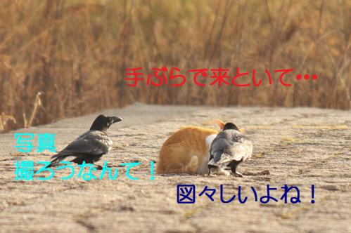 035_20130316193614.jpg