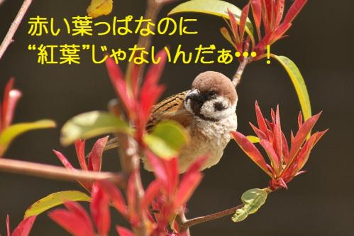 035_20130329213801.jpg
